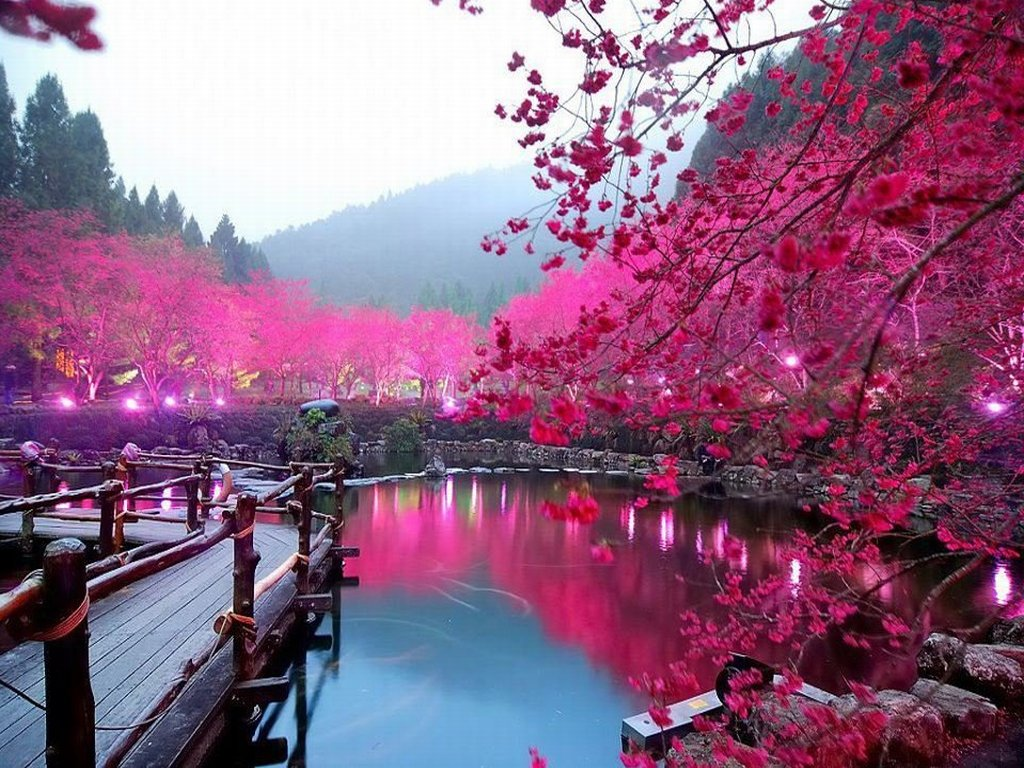 Sakura 16